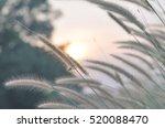 the grass under the sun | Shutterstock . vector #520088470