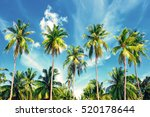 coconut palm trees perspective... | Shutterstock . vector #520178644