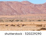 Oryx Gazella  Family Between...