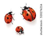 ladybird  ladybird illustration.... | Shutterstock .eps vector #520276216