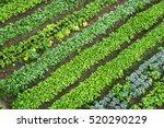 Green Vegetable Garden  Top View