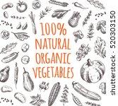 natural organic vegetables card.... | Shutterstock .eps vector #520303150