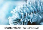 Winter Frost On Spruce Tree ...