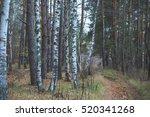 Tambov  Forest  Road  Nature O...