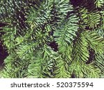 Green Christmas Pine Fir Needl...