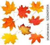 collection of autumn leaves on... | Shutterstock . vector #520409554