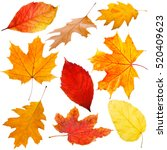 Collection of autumn leaves on...