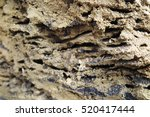 termite nest cross section in... | Shutterstock . vector #520417444