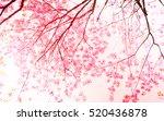 soft blurred of sakura flower...   Shutterstock . vector #520436878