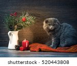Cat And Christmas Bouquet  ...