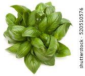 Sweet Basil Herb Leaves Bunch...