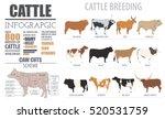 cattle breeding farm... | Shutterstock .eps vector #520531759