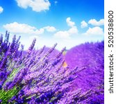Lavender Field With Bright...