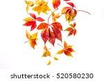 Autumn Red Orange Yellow Leave...
