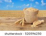 wheat grains in sack. ears of...   Shutterstock . vector #520596250