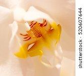 unusual flower yellow white
