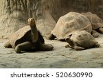 Giant Tortoise Turtle  Zoo...