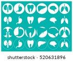 human organs   vector icons... | Shutterstock .eps vector #520631896