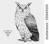 hand drawn vector realistic... | Shutterstock .eps vector #520669204