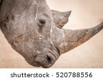 Side Profile Of A Black Rhino...