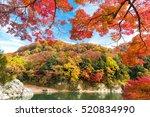 autumn foliage in nagatoro ... | Shutterstock . vector #520834990