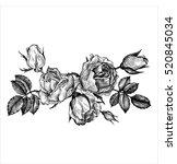 vintage vector floral... | Shutterstock .eps vector #520845034