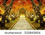 Plumeria Tree Tunnel In Autumn...