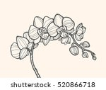 exotic orchid flower isolated ... | Shutterstock .eps vector #520866718