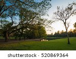 park of green grass and big... | Shutterstock . vector #520869364