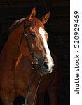 horse portrait on black... | Shutterstock . vector #520929469