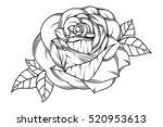 flowers roses  black and white. ... | Shutterstock .eps vector #520953613