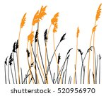 Silhouette Of Steppe Grass On...