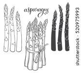 asparagus. vector illustration  ... | Shutterstock .eps vector #520975993