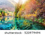 scenic view of submerged tree... | Shutterstock . vector #520979494