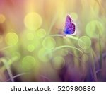 Stock photo butterfly 520980880