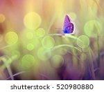 butterfly | Shutterstock . vector #520980880