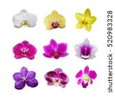 collection of various orchids... | Shutterstock . vector #520983328