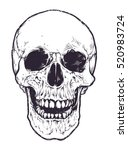 Anatomic Skull Vector Art....