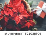 Poinsettia Flower In Woman...