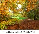 park in autumn with beech... | Shutterstock . vector #521039230