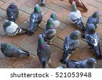 Grey Pigeons Standing On A Col...