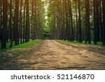 Road Path In A Pine Tree Forest....