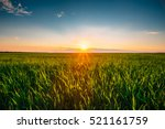 Landscape Of Green Wheat Field...