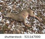 spike buck whitetail deer... | Shutterstock . vector #521167000