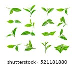 green tea leaf isolated on... | Shutterstock . vector #521181880
