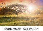 nature background concept ... | Shutterstock . vector #521190814