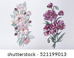 sketch of beautiful flowers on... | Shutterstock . vector #521199013