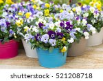 Pansies In Colorful Pots In A...