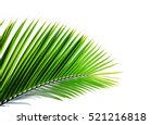 leaves of palm tree on white... | Shutterstock . vector #521216818