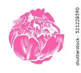 hand drawing peonies. vector... | Shutterstock .eps vector #521228590